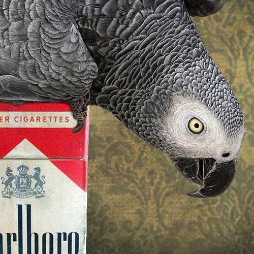 Basil the smoking parrot