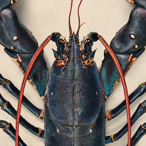 Jono's Lobster