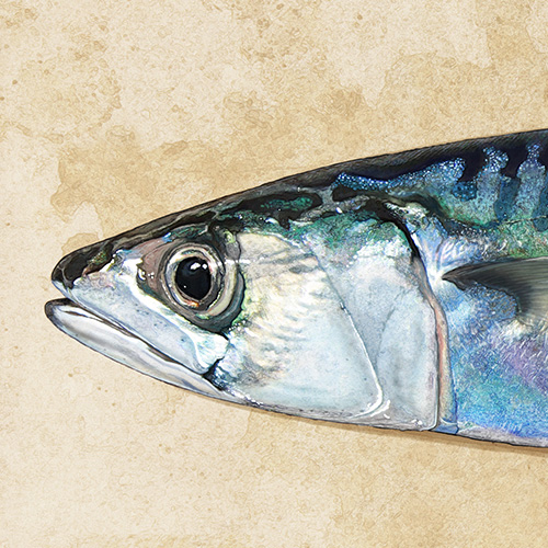 St Bride's mackerel